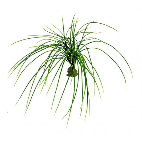 LR Congo grass approx 50cm, IF-66